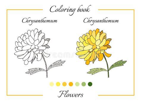 libro mums colouring book of libro da colorare con il bello fiore del crisantemo illustrazione vettoriale illustrazione di