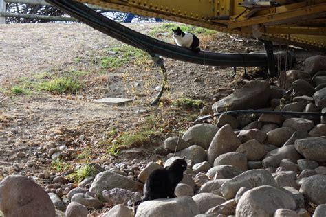 aspiag bolzano ufficio personale colonia per gatti a ponte druso