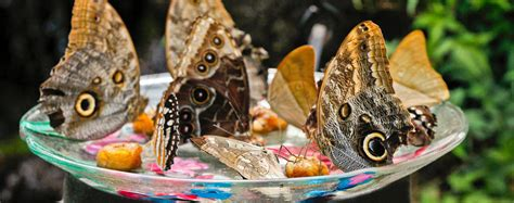 mackinac island butterfly house butterfly house mackinac island michigan a fun family activity