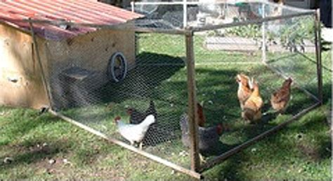 backyard poultry rearing how to raise backyard chickens the benefits of