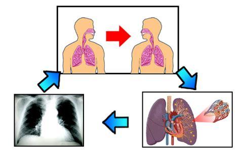 penyakit tbc kelenjar dan obatnya penyakit tbc paru tulang dan kelenjar