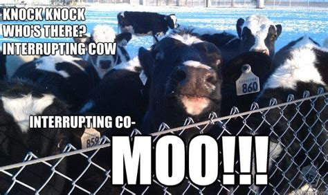 Moo Meme - 17 best images about flying cow on pinterest a cow