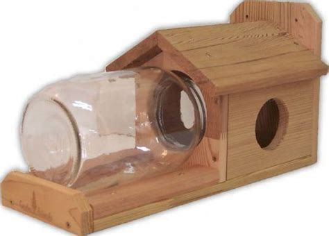 squirrel under glass feeder squirrel feeder deals on 1001 blocks
