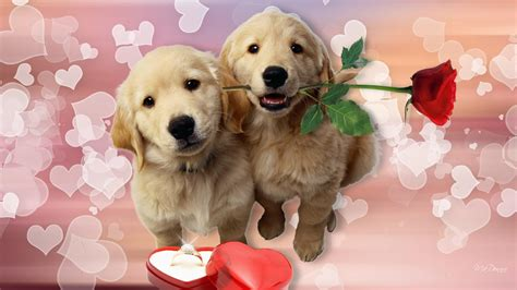 puppy s are puppys hd wallpaper get it now litle pups