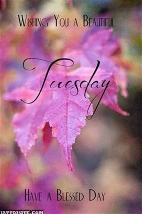 tuesday pictures images