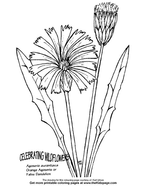 false dandelion flower free coloring pages for kids