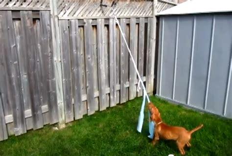 pole for dogs diy pole petdiys