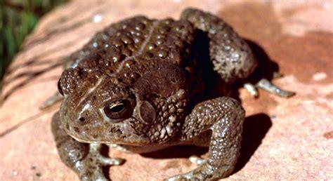video  wildlifestyle tip   toad friendly yard