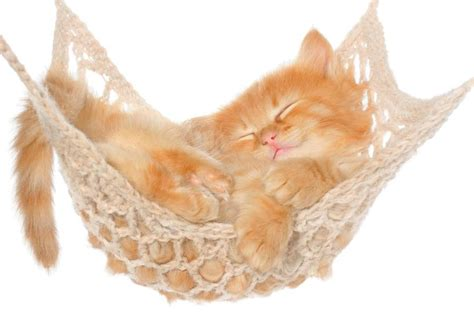 amaca per gatti foto amaca per gatto di valeria treste 326606