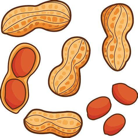 peanuts clipart peanut clip vector images illustrations istock