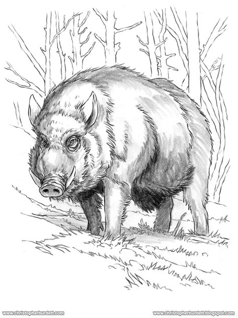 Drawing Boar the doodles designs and of christopher burdett