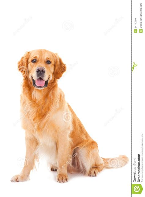 Golden Retriever Sitting Outline by Golden Sitting Buddha Sculpture Line In The Pavillion Royalty Free Stock Image Cartoondealer