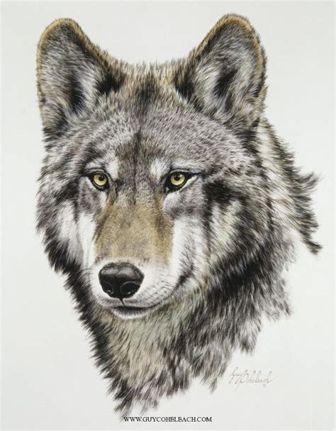 wolves drawings artistic wolf pencil and in color artistic wolf