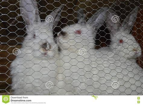 gabbia conigli allevamento conigli di allevamento conigli in gabbia fotografia stock