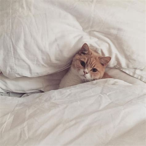 What S A Duvet Good Morning People It S Another Thewhitecompany Duvet