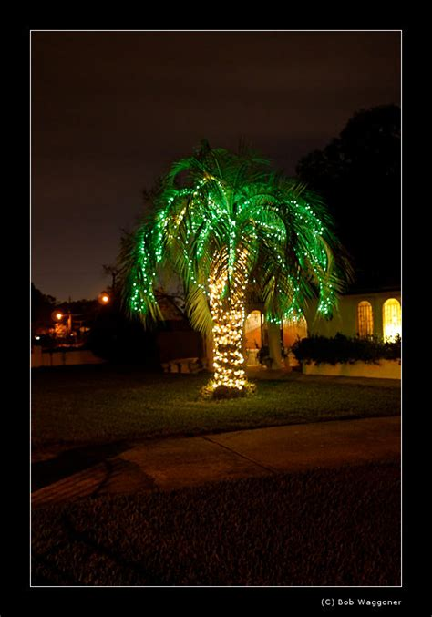 a florida xmas tree photo waggoner photos photos at
