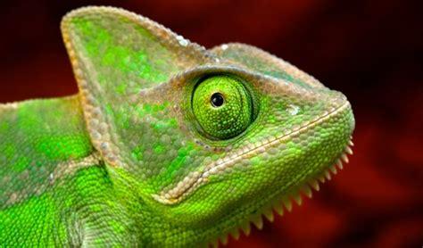 imagenes de animales ovoviviparos animales ovoviv 237 paros animaleshoy