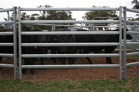 Cattle Carpet Sale Cheap Cattle Panels Used Fence Panels