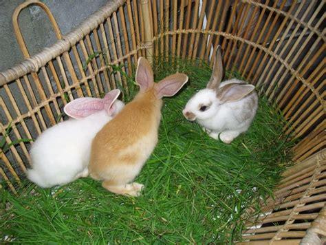 Harga Pakan Kelinci pakan alternatif kelinci hewan id