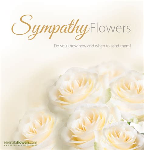 Send Sympathy Flowers by Sympathy Flowers What When To Send Them