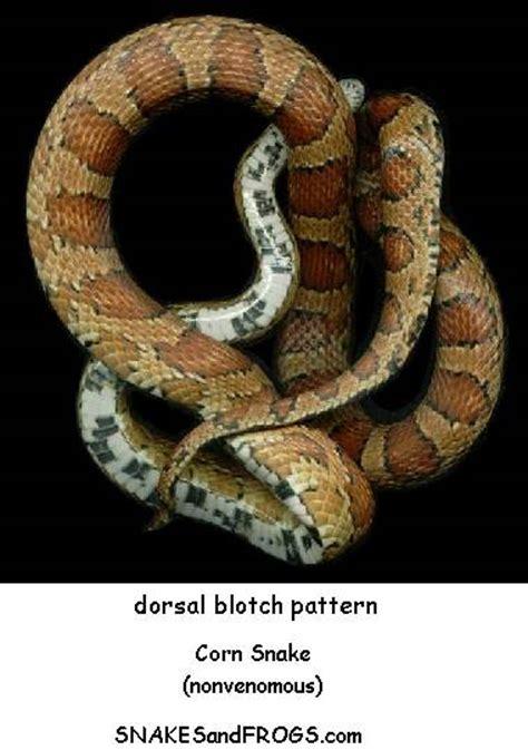 snake identification characteristics