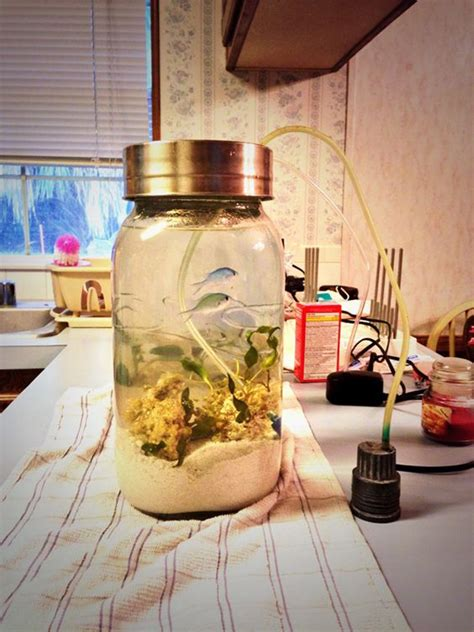 awesome diy fish tank  mason jar ideas homemydesign