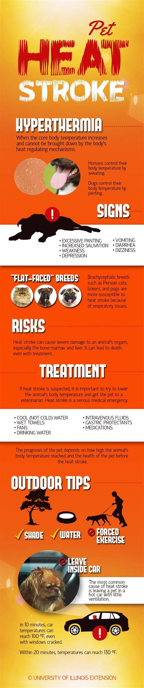 pug heat stroke 25 best ideas about pet health on facts about zeus care and puppy facts