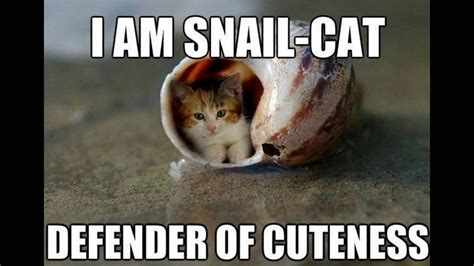 Meme Cute - cat cute meme www pixshark com images galleries with a