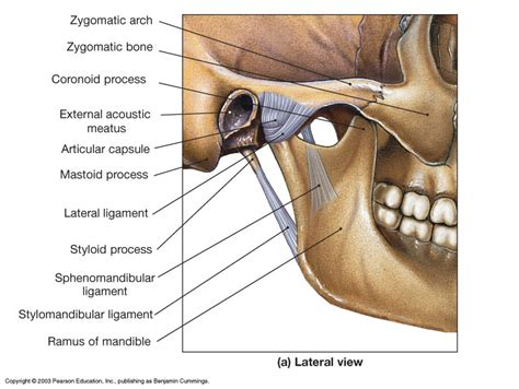 tmj diagram temporomandibular joint tmj