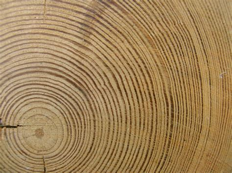 tree ring spasms of accommodation tree rings