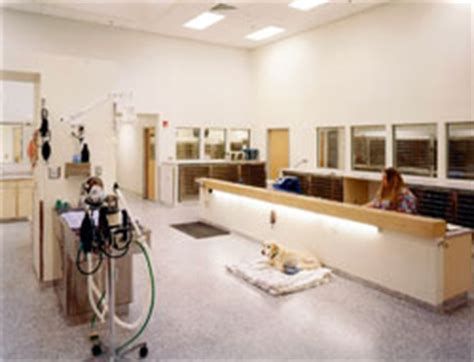 design guidelines for veterinary clinics stunning veterinary clinic design ideas gallery interior