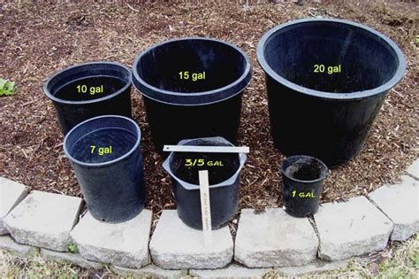 pot for large tomatoes 15 gallon planter adastra