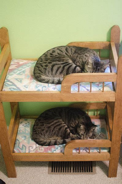 cat steps for bed 110 best images about furniture for cats on pinterest