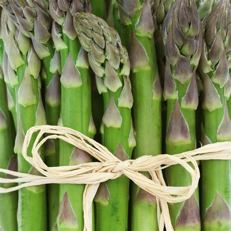 asparagus crowns mondeo  vegetable plants
