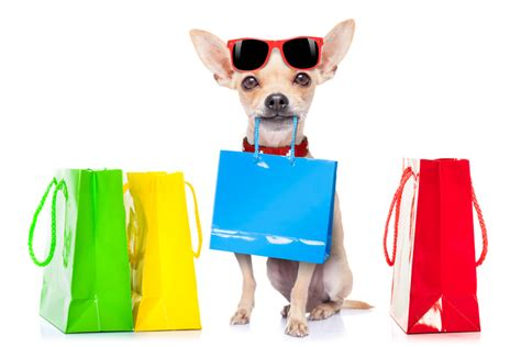 puppy shopping where to shop with your 8 approved stores