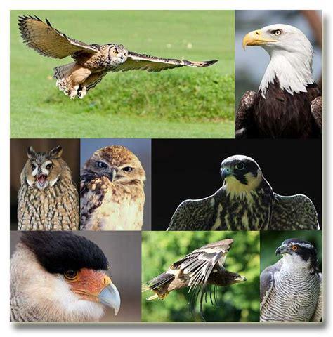 royalty free birds of prey photos
