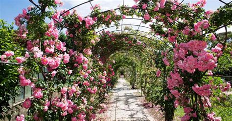 backyard rose gardens landscaping a rose garden choosing garden roses for your