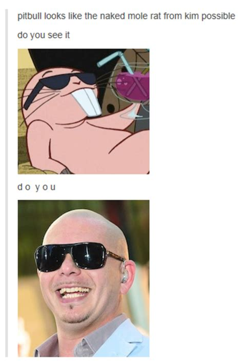 Naked Mole Rat Meme - pitbull looks like the naked mole rat from kim possible
