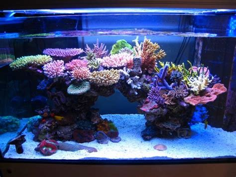 saltwater aquascaping ideas reef aquariums for your inspiration reefland com