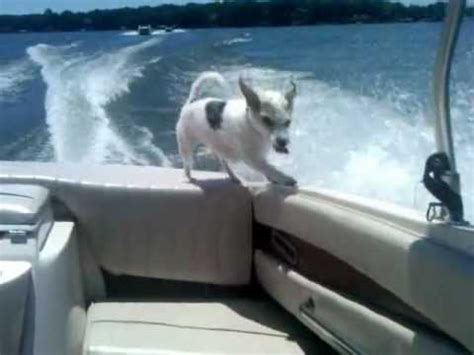 boat hits dog idiot boat captain hits several boats doovi
