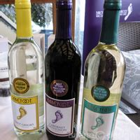 Barefoot Wine Giveaway On Facebook - barefoot wine bubbly vancouverscape