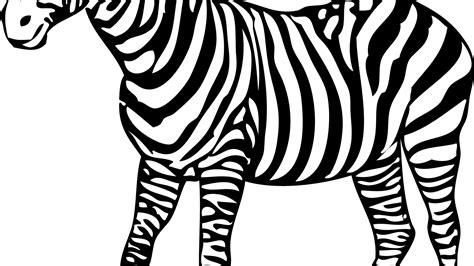 zebra color zebra coloring pages for printable of pictures to