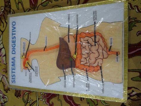 maqueta sistema digestivo experimentos escolares en san luis
