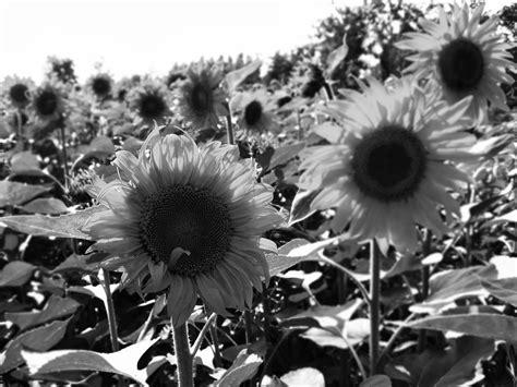 wallpaper hitam putih romantis gambar mewarnai winnie the pooh gambar mewarnai lucu