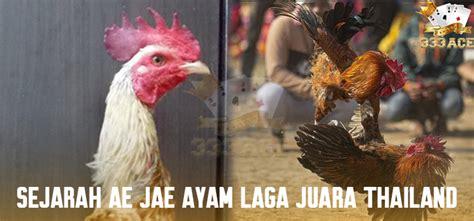sejarah ae jae ayam laga juara thailand ace