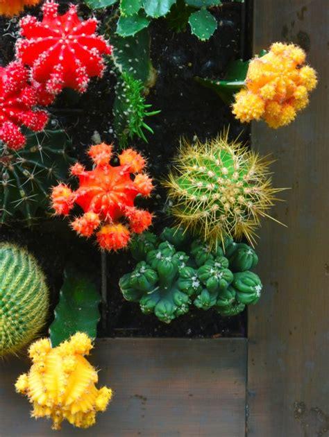 vertical cactus garden