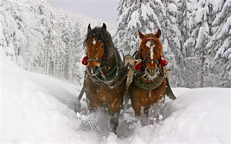 christmas wallpaper with horses brown horses running through snow hd horses wallpaper
