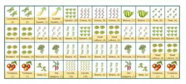 Companion Planting Garden Layout Year Help With Layout