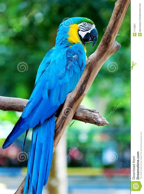 big colorful bird colorful parrot royalty free stock photography image