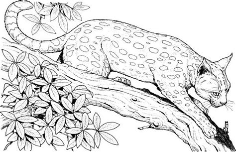 leopard   branch tree coloring page tree tree